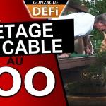 Pétage de cable au zoo