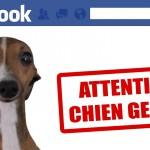 Les animaux sur Facebook